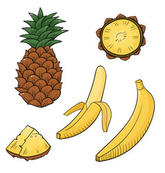 with juicy tropical fruits vector image