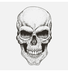 Scary skull of human vector image