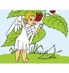 Cupid and berries vector image