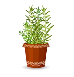 Rosemary in a flower pot vector