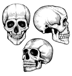 Hand drawn death scary human skulls vector