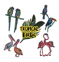 collection of exotic tropical birds vector image