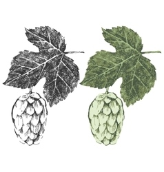Hand drawn hop brunches vector