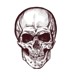 Hand drawn anatomy skull with different tones and vector