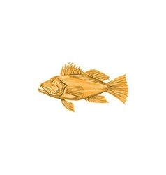 Black sea bass drawing vector