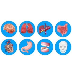 Human organs on round badge vector image