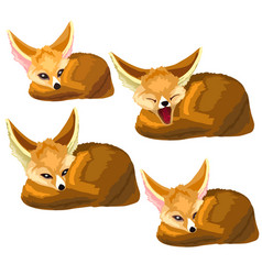 Set of lying sand foxes and one yawns vector