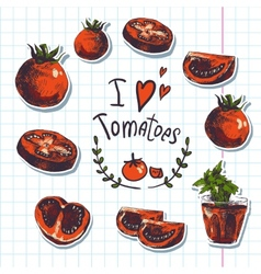 Hand drawn sketch of vegetables tomatoes vector