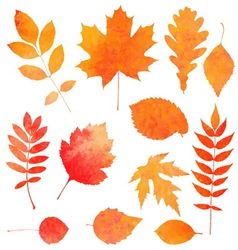 Watercolor collection of beautiful orange autumn vector
