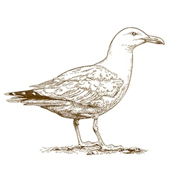 Engraving seagull vector