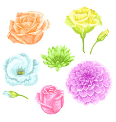 Set of decorative delicate flowers objects for vector