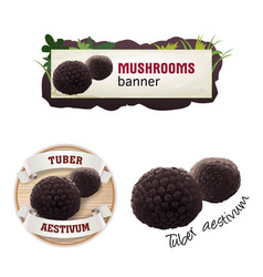 set of mushroom banner badge sticker vector image