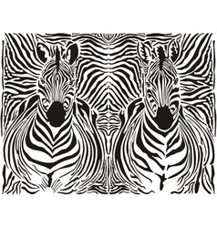 zebra pattern background vector image vector image
