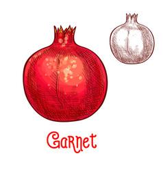 Garnet fruit sketch isolated icon vector