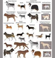 dog show vector image