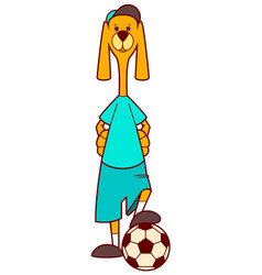 Dog soccer player and ball vector