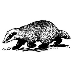 european badger vector image vector image