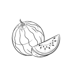 Hand drawn Watermelon sketches vector image vector image
