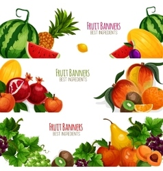 Garden and exoic fruits banners set vector