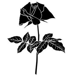 Roses flower silhouette vector