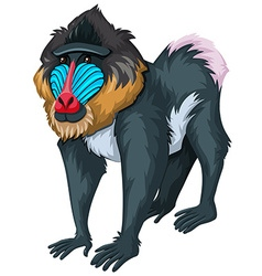 Baboon with happy face vector
