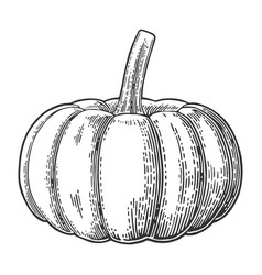Pumpkin vintage engraving vector