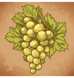 Engraving grapes on the branch retro vector
