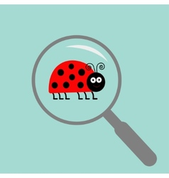 Ladybug ladybird insect under magnifier zoom lense vector