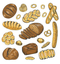 Set of colored bakery organic food vector