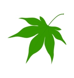 Green leaf on a white background vector