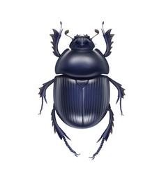 Scarabaeus sacer beetle vector