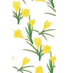 Yellow crocus flowers vector
