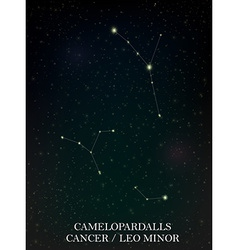 Camelopardalls and cancer leo minor constellation vector