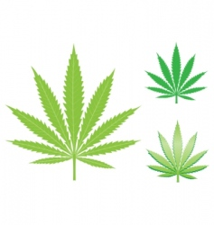hemp leaf vector image vector image