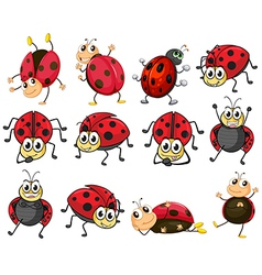 Cute ladybugs vector image