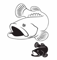 grouper vector image