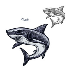 shark fish isolated sketch icon vector image