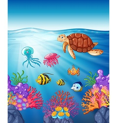 Turtle and fish swimming underwater vector
