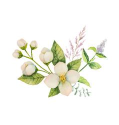 Watercolor bouquet of jasmine and mint vector