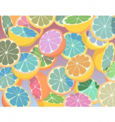 Citrus fruit vector
