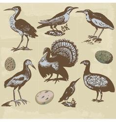 Vintage birds set vector