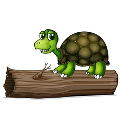 A turtle above the wood vector