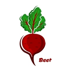 Fresh isolated cartoon beet vegetable vector