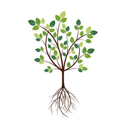 color tree and roots vector image vector image