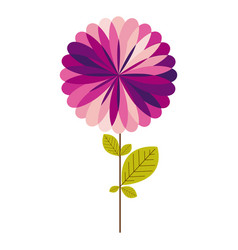 Colorful stem with leaves and purple flower vector