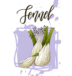 Vegetable food banner fennel sketch organic food vector