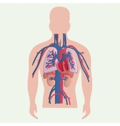 Medical human organs vector image vector image
