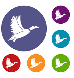 duck icons set vector image vector image