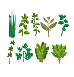 Set of 9 herbs vector