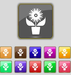 Flowers in pot icon sign set with eleven colored vector